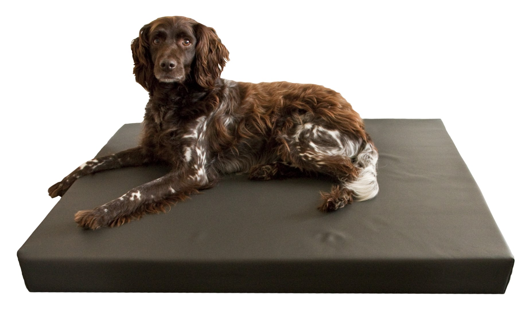 Holland animal care HD Dog Bed M