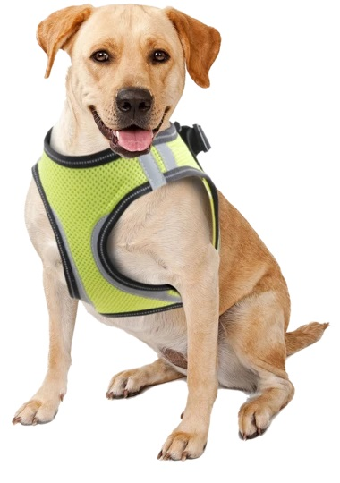 Pawise Doggy Safety Harness XL A:40-48cm B:50-54cm